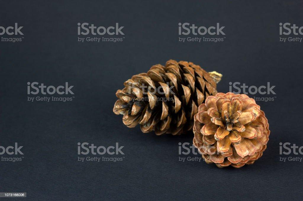 Brown pine cone on dark blue paper background