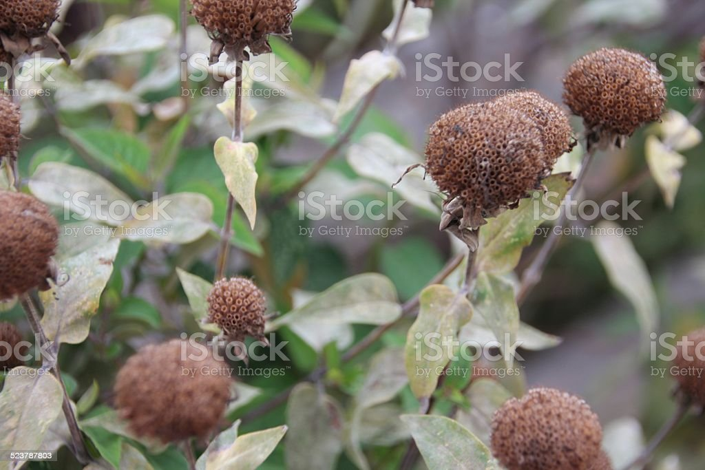 Brown Plants/Flowers stock photo