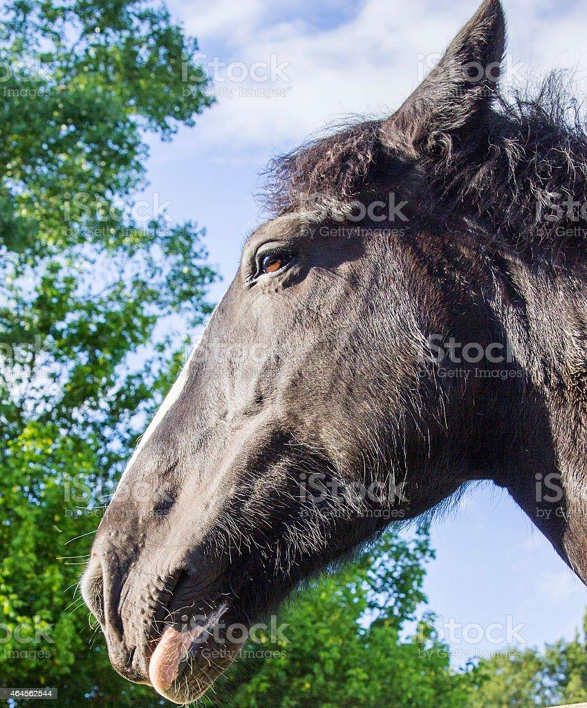 Brown Pony Closeup stock photo