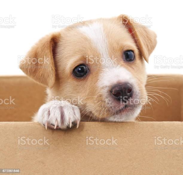 Brown puppy in a box picture id672361846?b=1&k=6&m=672361846&s=612x612&h=tamylxf7ynox3hexwv ggip0w2ngkbhzcgjkhyffdiu=