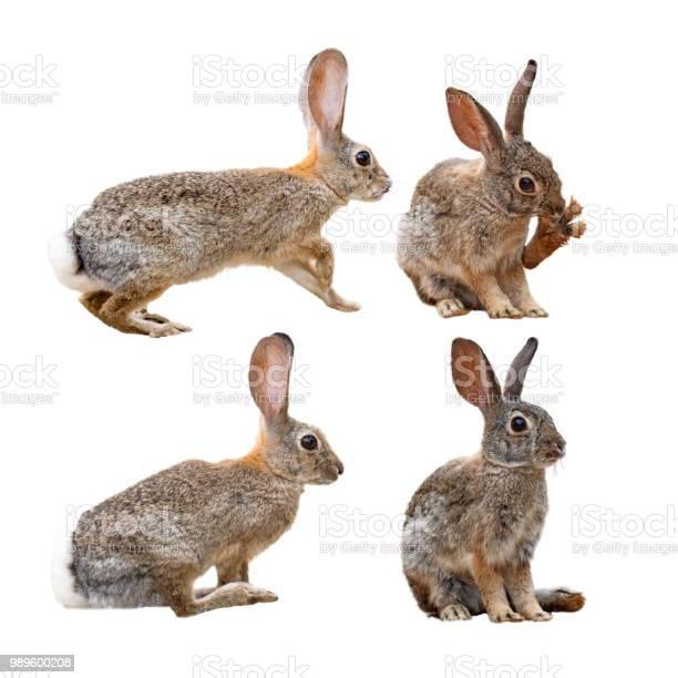 Brown rabbit in four positions picture id989600208?b=1&k=6&m=989600208&s=612x612&h=1yreffvvw855m acpdwlivqqg5zr0iprrk97xku8wva=