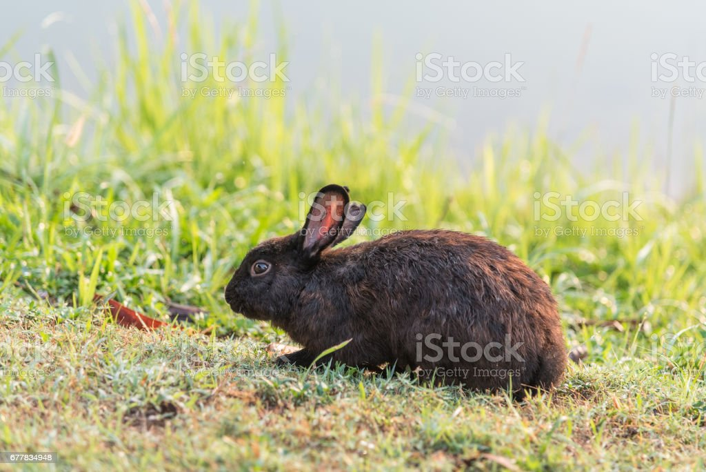 Brown rabbit on the grass. royalty-free stock photo