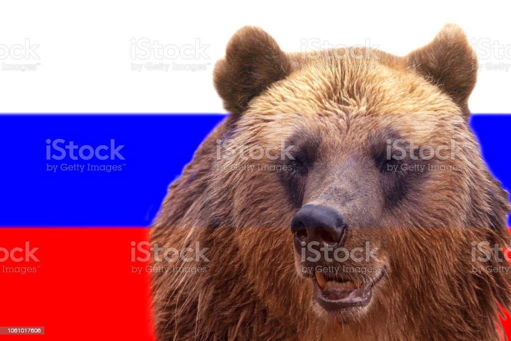 Brown Russian bear on the Russian flag stock photo