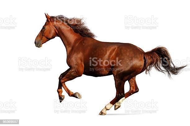 Brown sharp horse galloping picture id95369557?b=1&k=6&m=95369557&s=612x612&h=itvdcp064csztzqlp31dbpdwekncz7gj9qtwkvlctkq=