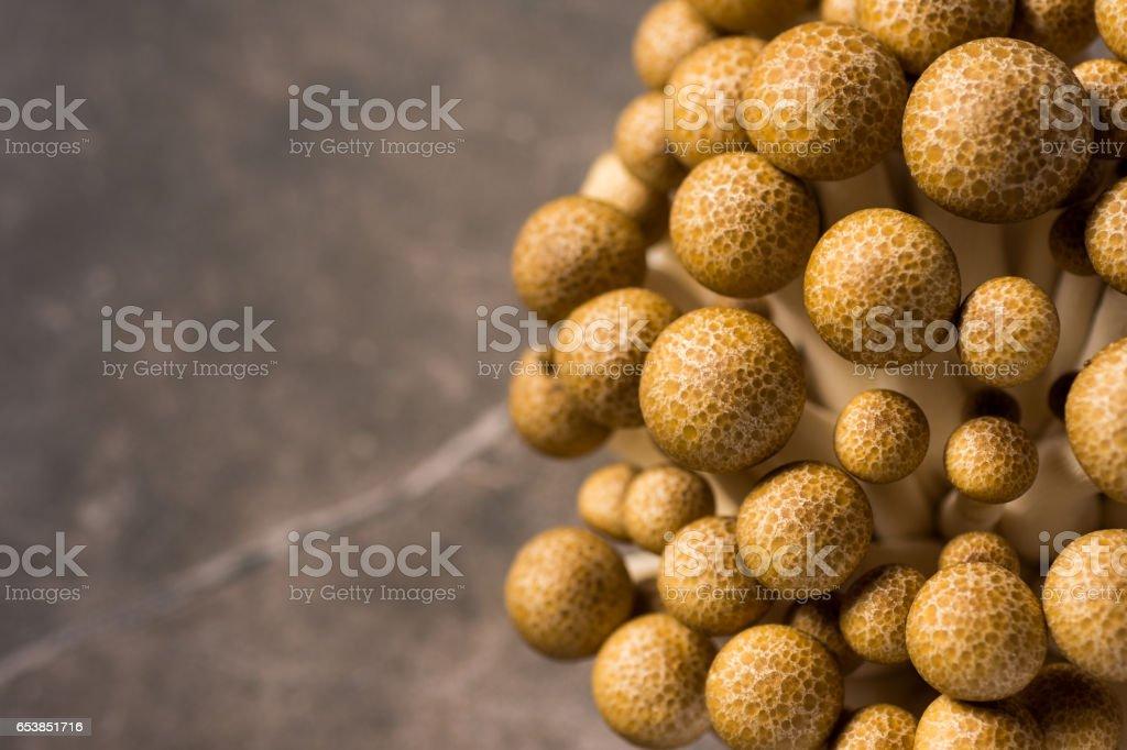 Brown Shimeji Mushrooms as Fungi Food Background stock photo