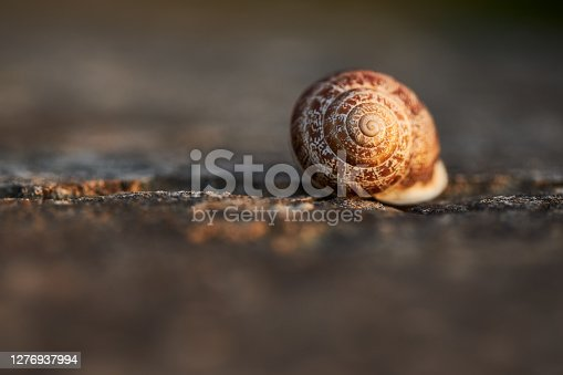 A brown snail shell illuminated by the evening sun and photographed on a stone background with a macro lens, high resolution with copy space