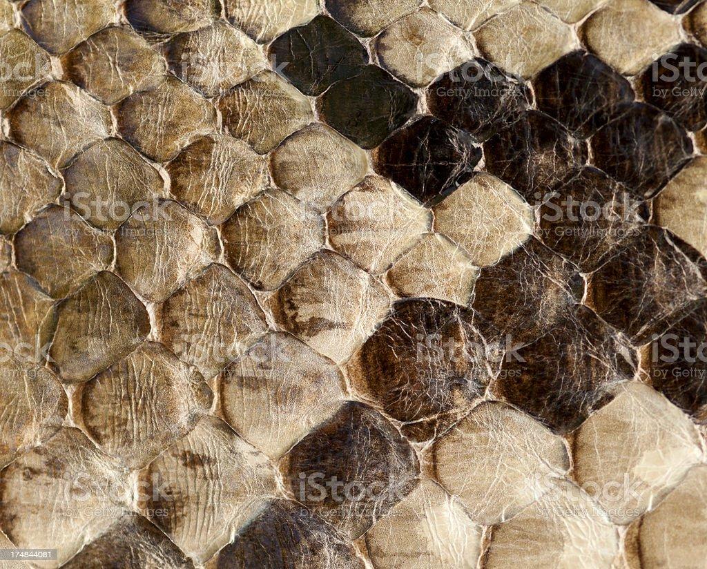Brown snake skin royalty-free stock photo