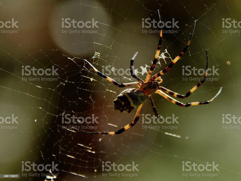 Brown spider on the web stock photo