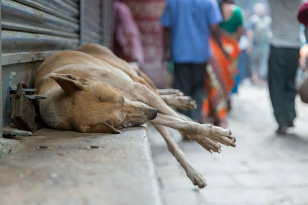 Braune streunende Hunde mit ihren Beinen in der Luft, die durch eine Straße auf einem Felsvorsprung schlafen – Foto