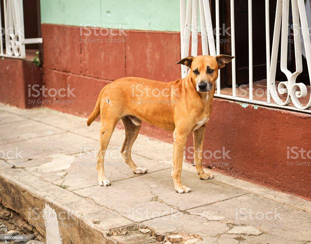 Brown street dog stock photo