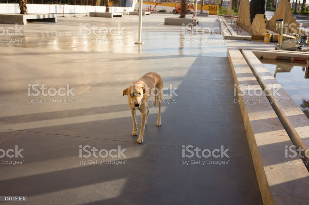 brown street dog standing in shadow hot day