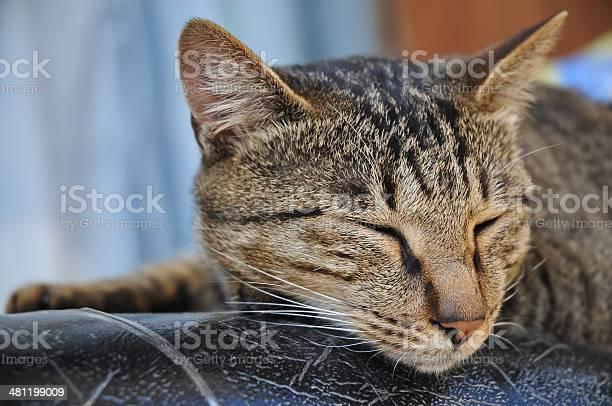 Brown stripes cute lazy cat is sleeping picture id481199009?b=1&k=6&m=481199009&s=612x612&h=xhayhtpxb83frpvm1xnukrjxitxso90q6ptgwrr kv8=
