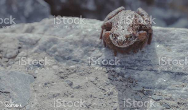 Photo of Brown toad sits on a rock