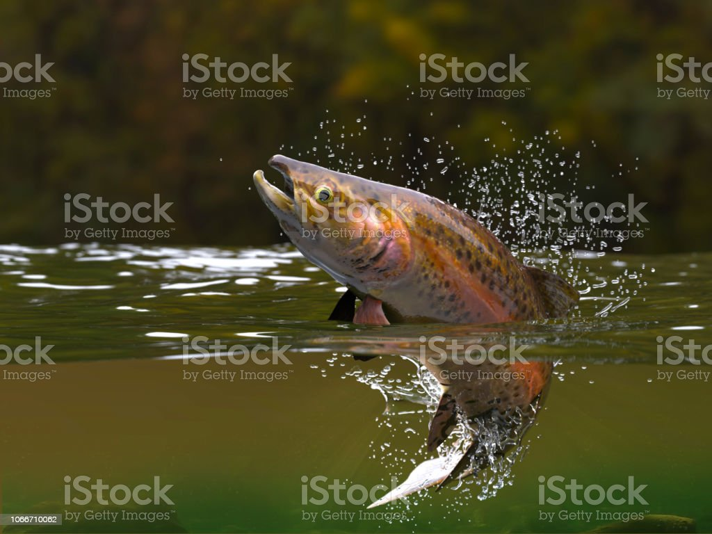 Brown trout fish jumping in river halfwater view 3d realitstic render stock photo