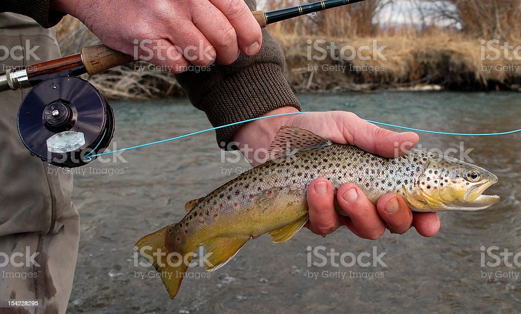 Brown Trout in Hand royalty-free stock photo