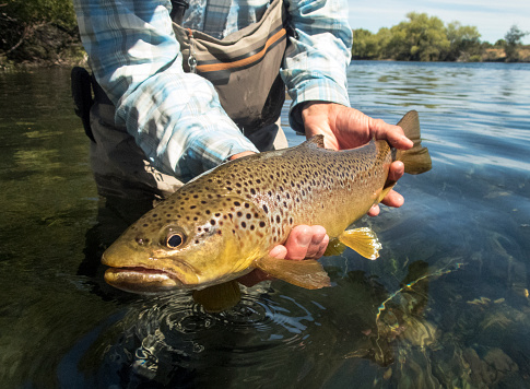 A man holding a large brown trout.