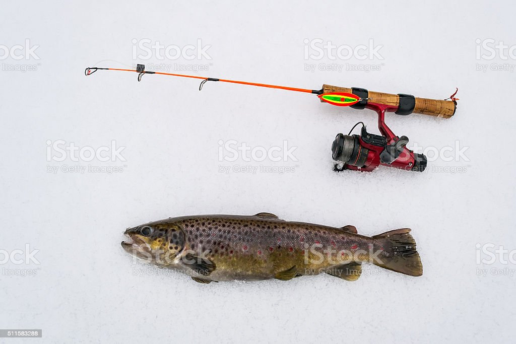 Brown trout - winter fishing trophy stock photo