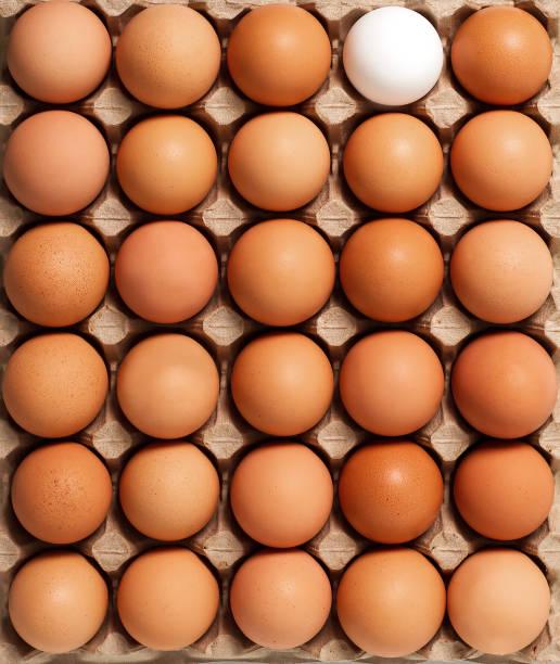 bruin wit verse kippeneieren in karton verpakking. bovenaanzicht - chicken bird in box stockfoto's en -beelden