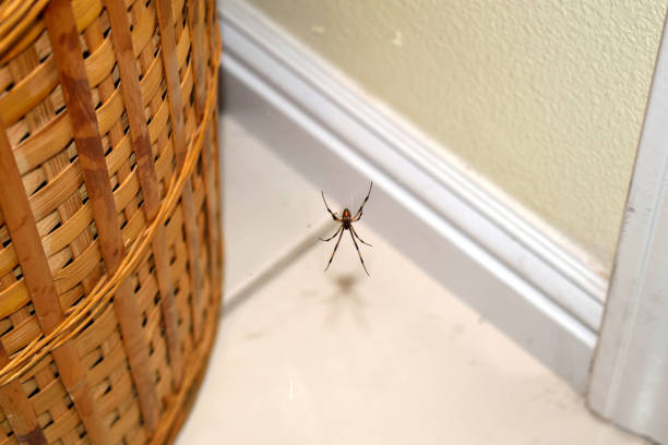 A Brown Widow Near a Basket stock photo