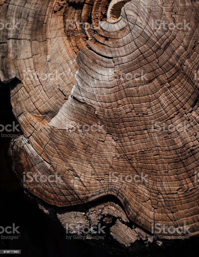 Fondo de textura de madera marrón con madera anillos anuales