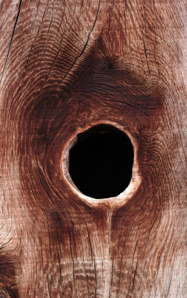 brown wooden planks abstract  background - knotted wood stock pictures, royalty-free photos & images