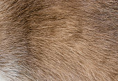 Texture and pattern, macro showing hairs