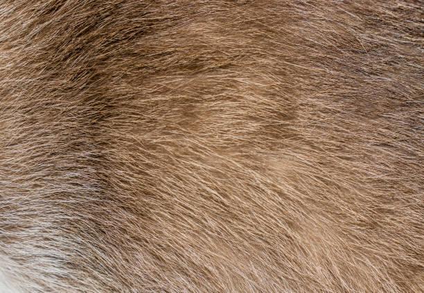 Brown yellow and grey cat fur closeup picture id839514058?b=1&k=6&m=839514058&s=612x612&w=0&h=n21vw5yb33oawqyzslbonuefw42kutmy81poq431iyy=