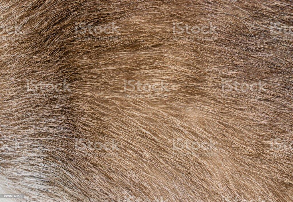 Brown, yellow and grey cat fur closeup stock photo