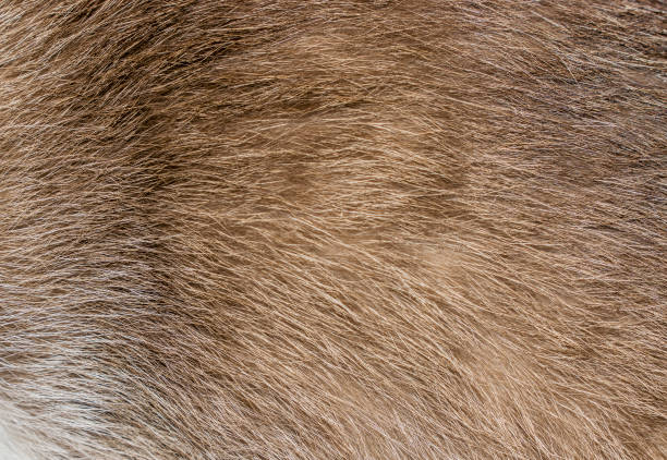Brown, yellow and grey cat fur closeup Texture and pattern, macro showing hairs animal hair stock pictures, royalty-free photos & images