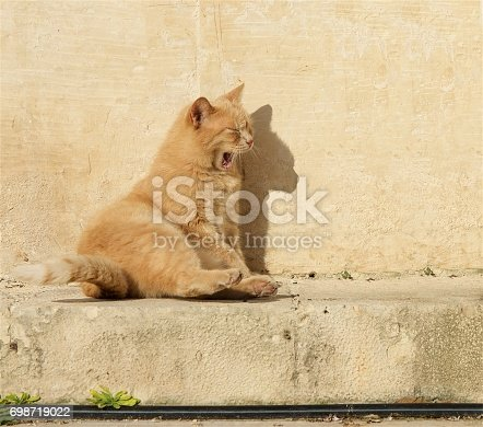 Cat relaxing on a sun in the bar. Valletta, Malta. Maltese cat. Cat relaxing on a sun