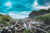 Dead trees on the beach at Bruce Bay at the Tasman Sea in New Zealand