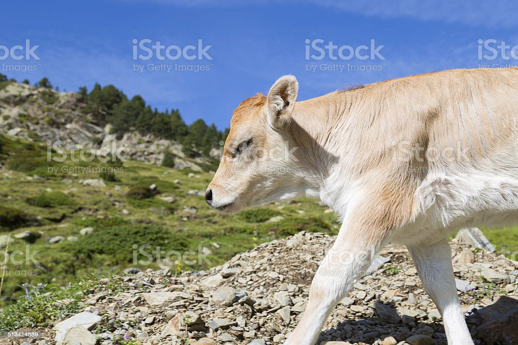 Bruna Pyrenees stock photo