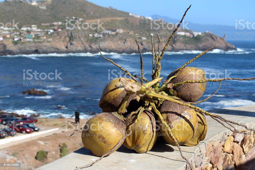Brunch de cocos sobre fondo marino - foto de stock
