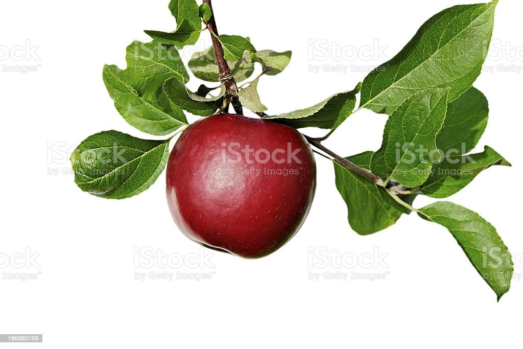 Brunch with apples. stock photo