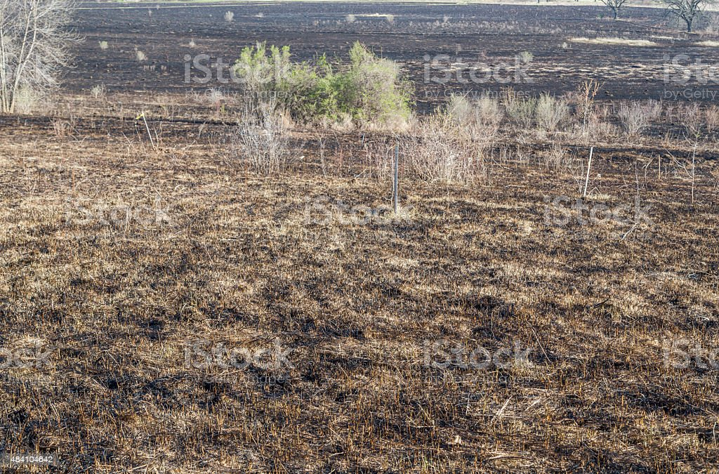 Bruned Grassland stock photo