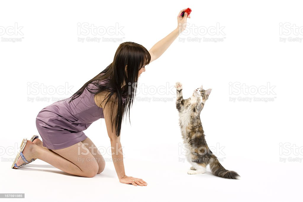 holding and touching a cat cat training and behavior