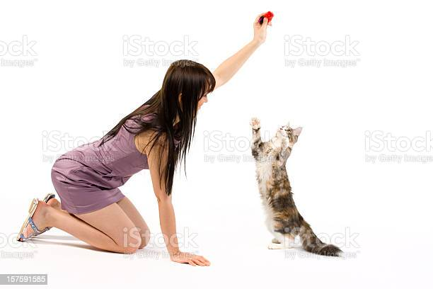 Brunette women in lilac dress playing with a cat picture id157591585?b=1&k=6&m=157591585&s=612x612&h=9znjvceafa9z5djjz7wmrqsx6 ruuttotneydiiiyi4=