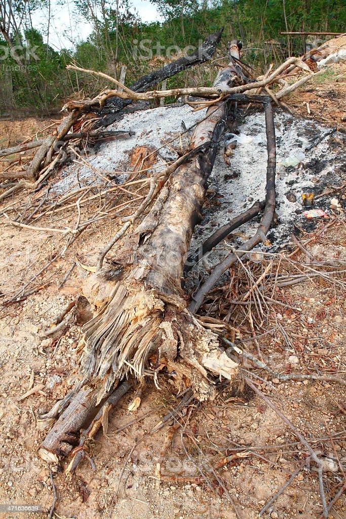 Drzewo występowały Ruiny zbiór zdjęć royalty-free