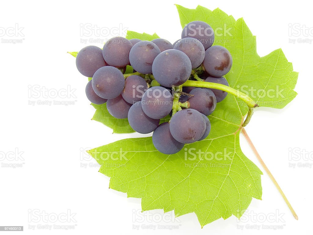 Brush and sheet of a grapes royalty-free stock photo