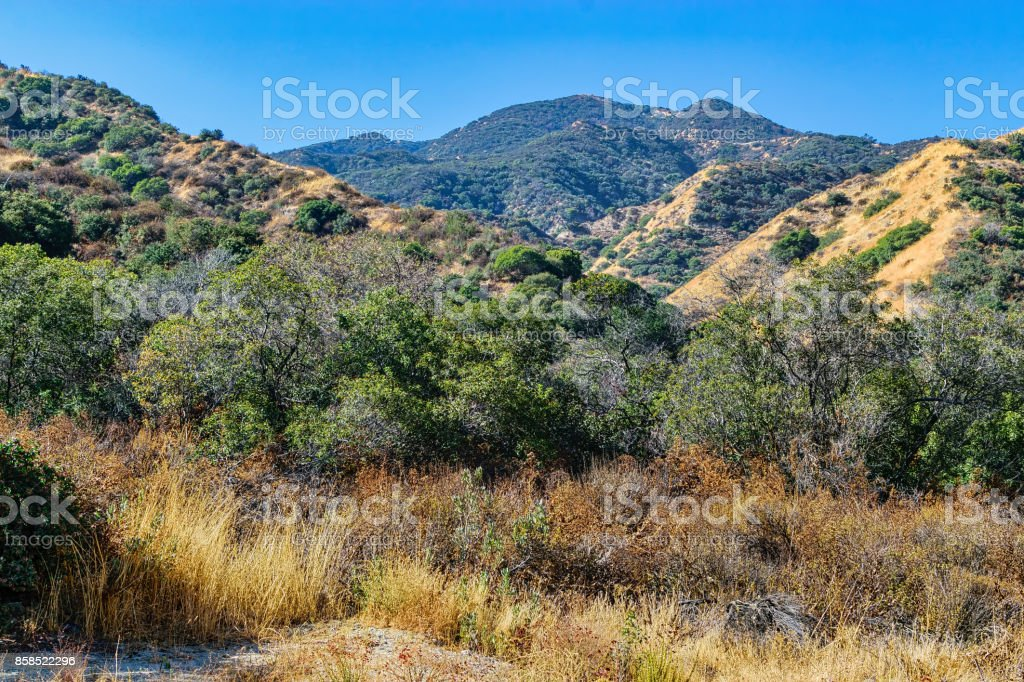 Brush and trees in the mountains stock photo