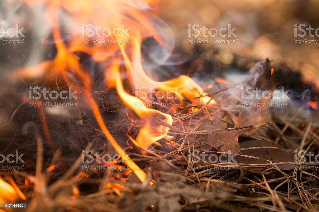 Brush Fire stock photo