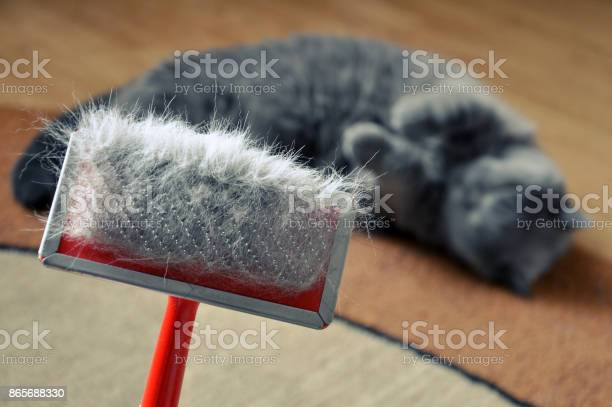Brush for combing the cat fur with hair picture id865688330?b=1&k=6&m=865688330&s=612x612&h=t ffmbskaynlslum1mzlthpys9epr1xkfj1nssoc3ey=