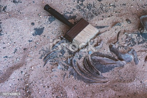 istock brush on bone in sand of archaeological excavation site 1027438824