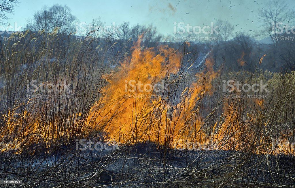 Brushfire royalty-free 스톡 사진