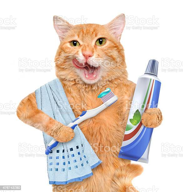 Brushing teeth cat picture id476743280?b=1&k=6&m=476743280&s=612x612&h=ugejvxrz76qamlmnfefpqhet7c9pe6bb4xu41ud bfu=