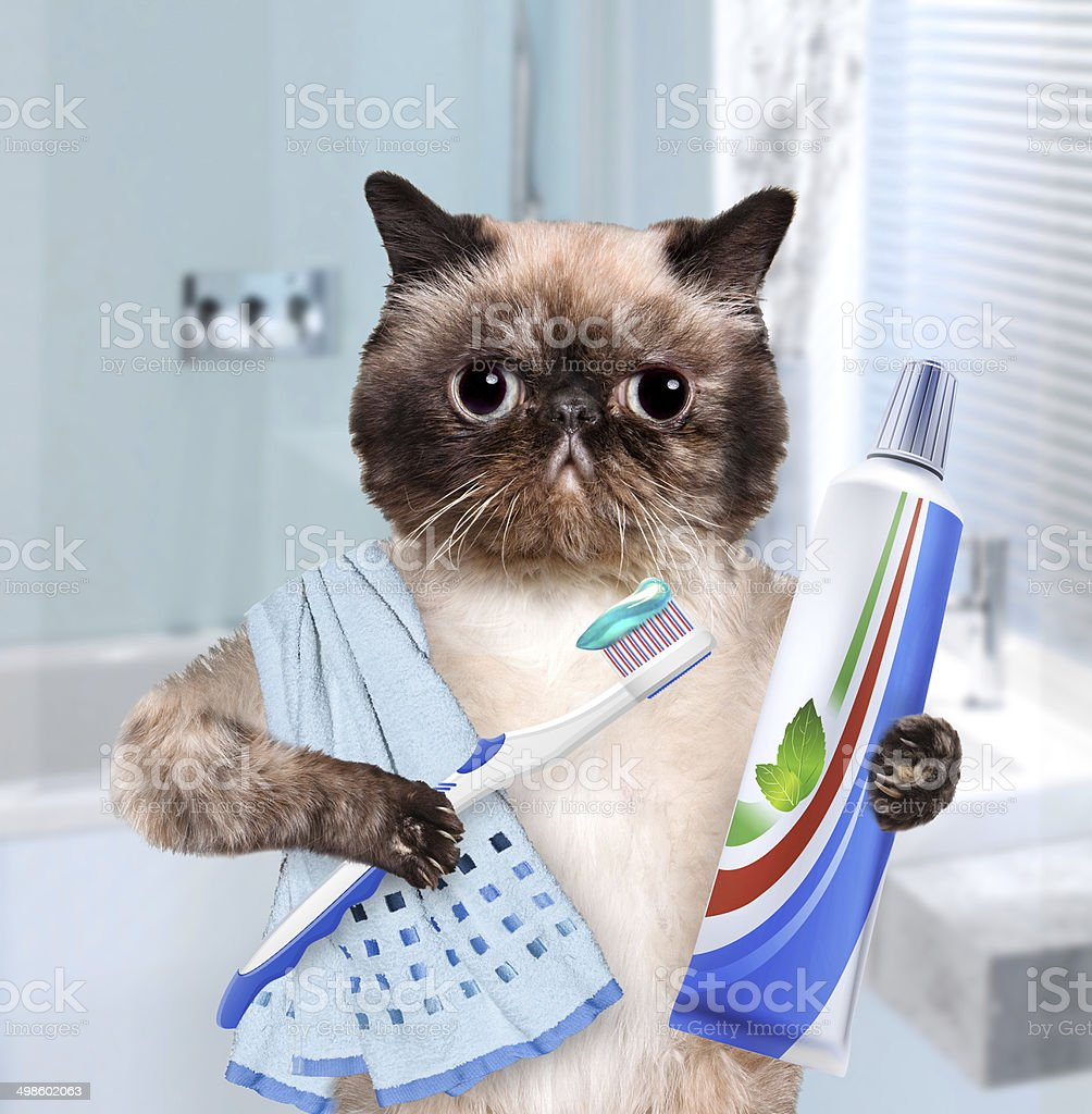 Brushing teeth cat. stock photo