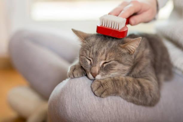 Bürsten der Katze – Foto