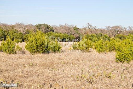 istock Brushy Creek Regional Trail 507844948