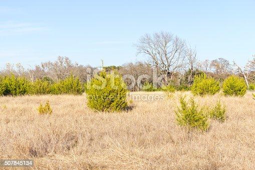 istock Brushy Creek Regional Trail 507845134