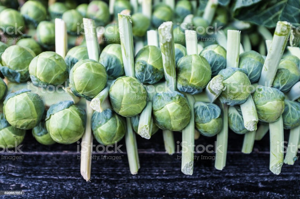 Brussel sprouts on stalks stock photo